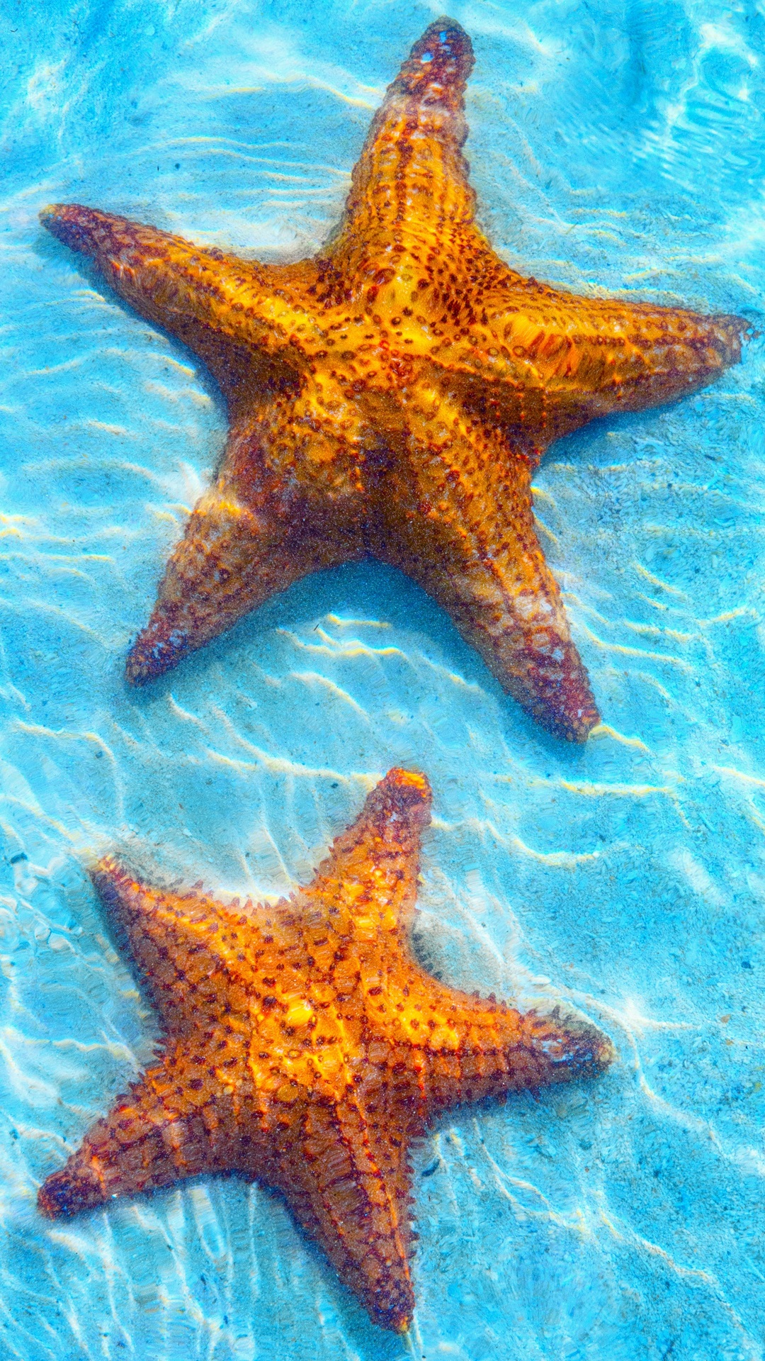 Sea Blue Water Starfish IPhone Wallpaper