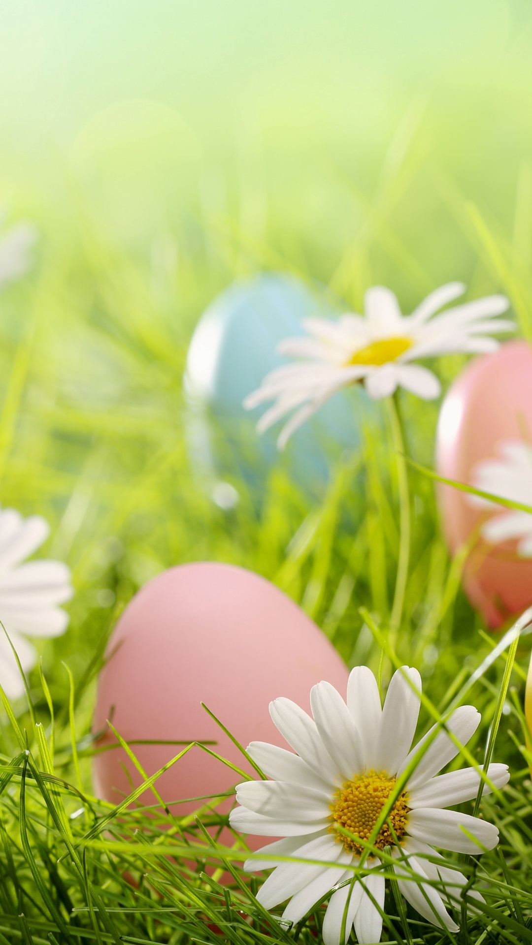 Easter Colorful Eggs Daisies Flowers Grass Iphone X 8 7 6 5 4