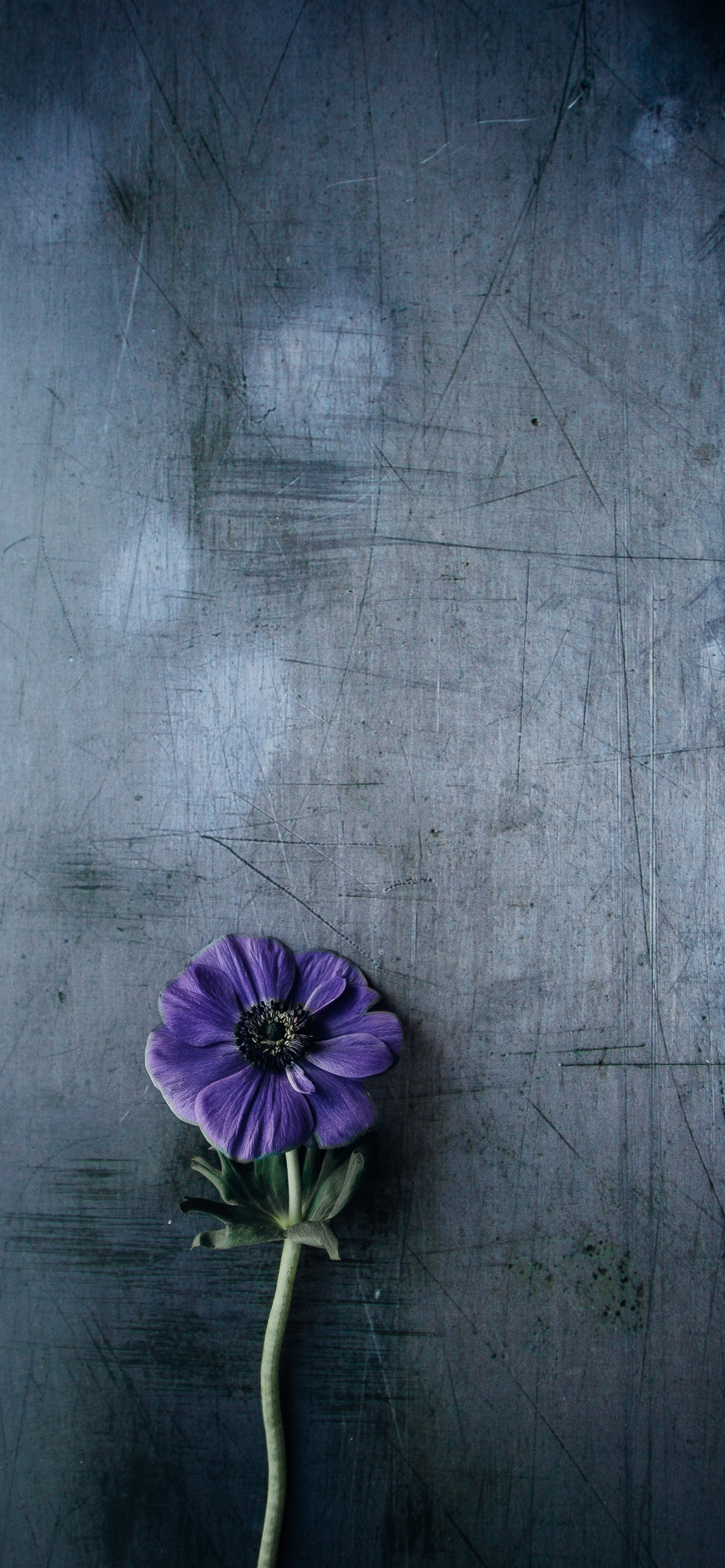 Purple Flower Gray Background Iphone Xs Max X 8 7 6 5 4