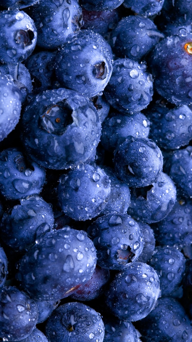 Best Plant Food For Blueberries
