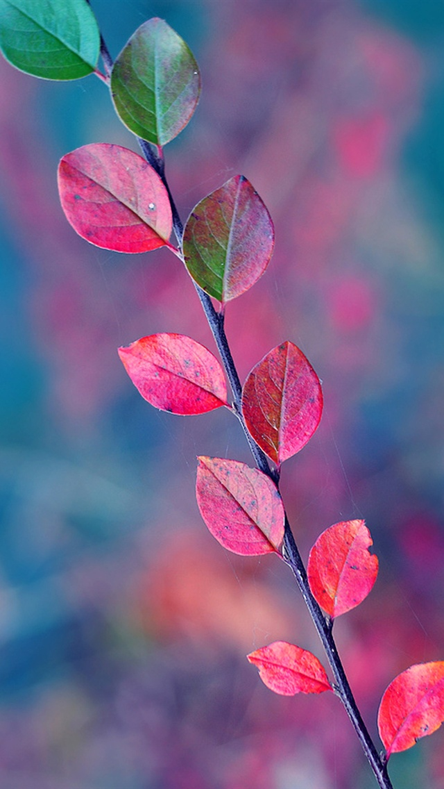 Green And Red Leaves In Autumn Iphone X 8 7 6 5 4 3gs Wallpaper Download Iwall365 Com