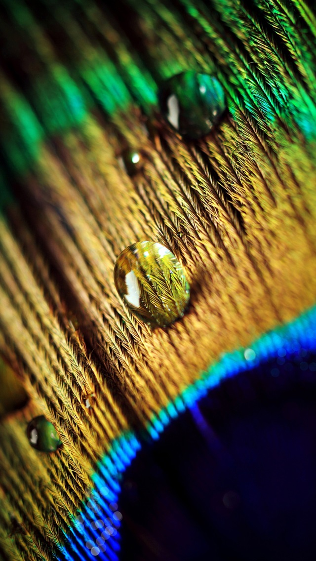 Peacock feather, water drops, macro photography iPhone 5 (5S) (5C) (SE) wallpaper - 640x1136
