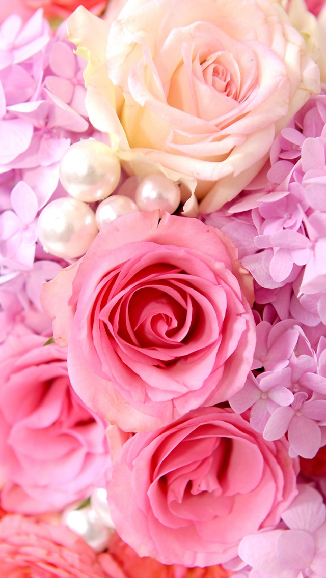 Iphone 5 Backgrounds Pink Pink roses back...