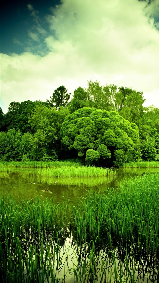 Nature scenery, green, pond, grass, trees, dusk iPhone 5 (5S) (5C) (SE) wallpaper - 640x1136