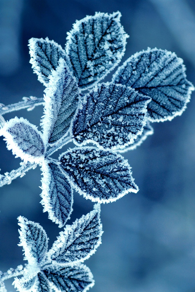 Frost Leaves Iphone X 8 7 6 5 4 3gs Wallpaper Download