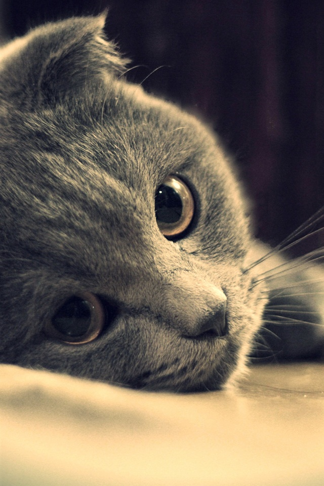 cute cats wallpaper free download