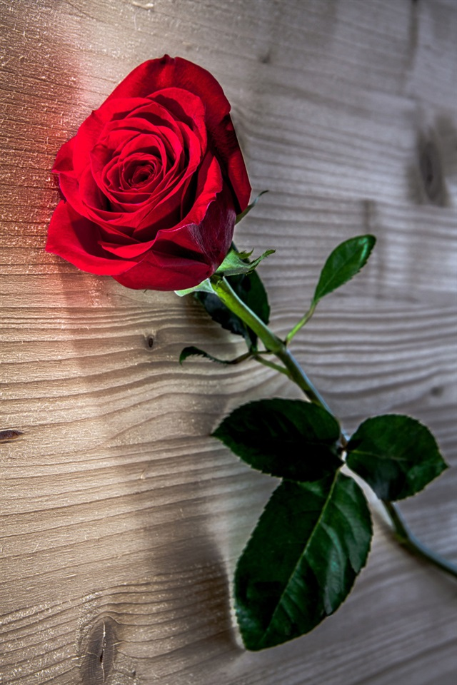 red rose flower wooden table iphone x 8 7 6 5 4 3gs