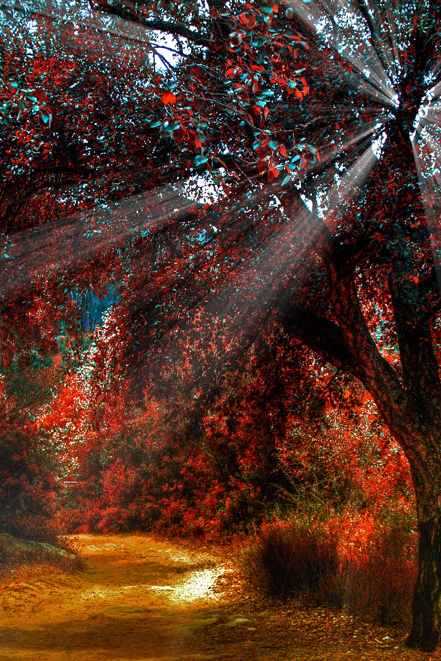 Nature Red Leaves, Autumn, Path, Sunlight IPhone Wallpaper