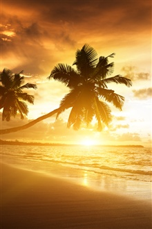 Beach sunset, palm trees iPhone Wallpaper Preview