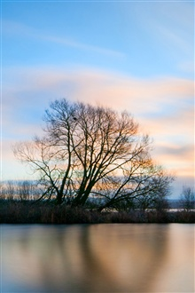 Beautiful lake surface and trees morning iPhone Wallpaper Preview