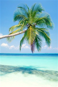 Blue beach a coconut tree iPhone Wallpaper Preview