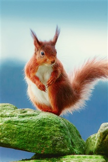 Cute brown squirrel iPhone Wallpaper Preview