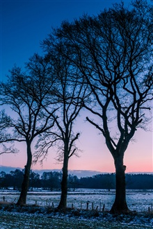 Norway winter, fields morning dawn, trees iPhone Wallpaper Preview