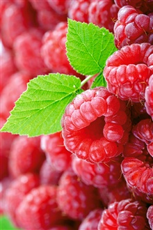 Berries raspberry leaf iPhone Wallpaper Preview