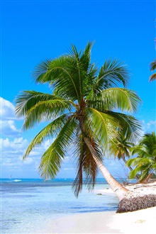 Caribbean shore beach, coconut trees, sea iPhone Wallpaper Preview