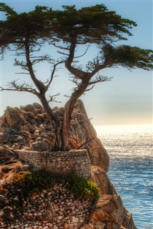Coast rock cliff tree iPhone Wallpaper Preview