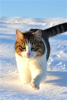 Cute cat walking in the snow winter iPhone Wallpaper Preview