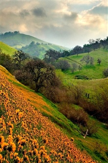 Green hills and orange flowers iPhone Wallpaper Preview