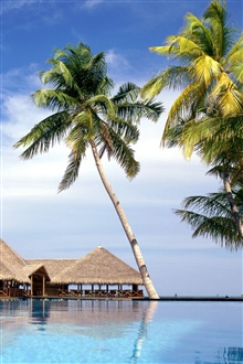 House, sea water, palm trees iPhone Wallpaper Preview