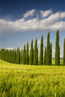 Italy, Campania, spring scenery, fields, trees iPhone Wallpaper Preview