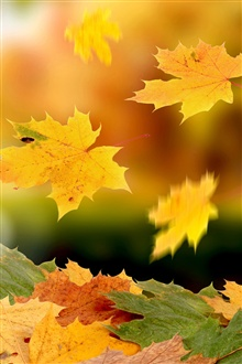 Maple leaves falling in autumn iPhone Wallpaper Preview
