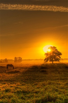 Nature morning, sunrise, German landscape iPhone Wallpaper Preview