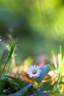 Grass, wildflowers, macro photography iPhone Wallpaper Preview