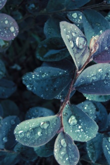 Morning, dew, leaves iPhone Wallpaper Preview