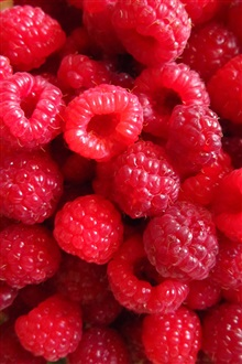Many red raspberry berries iPhone Wallpaper Preview