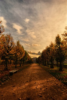 Park, path, bench, trees, autumn, dusk iPhone Wallpaper Preview