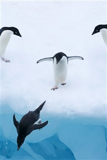 Penguins, ice, snow, water iPhone Wallpaper Preview