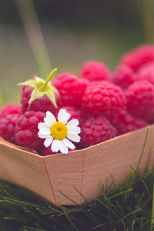 Red raspberries, daisy, grass iPhone Wallpaper Preview