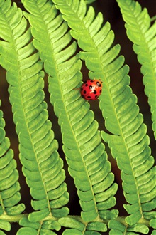 Spring green leaves ladybug iPhone Wallpaper Preview