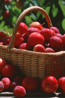 A basket red plums iPhone Wallpaper Preview
