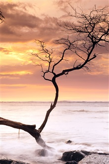 Sea, coast, tree, sunset, Hawaii, USA iPhone Wallpaper Preview