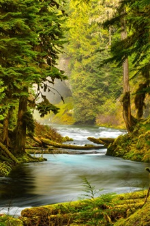 McKenzie River, Oregon, forest, river, trees iPhone Wallpaper Preview