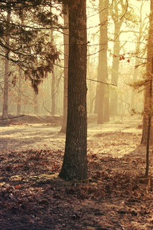 USA, New Jersey, forest, morning iPhone Wallpaper Preview