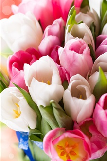 Colorful tulips, flowers, spring iPhone Wallpaper Preview
