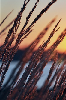 Early morning, dawn, grass, river iPhone Wallpaper Preview