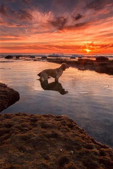 Red sky, sea, beach, sunset, dog iPhone Wallpaper Preview