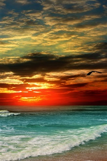 Sunset beach, sea, shore, tropical, bird iPhone Wallpaper Preview