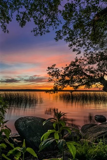 Sunset, trees, lake iPhone Wallpaper Preview