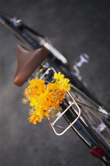 Yellow flowers, bike, bouquet iPhone Wallpaper Preview