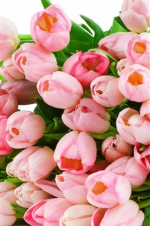 Bouquet of pink tulips close-up iPhone Wallpaper Preview