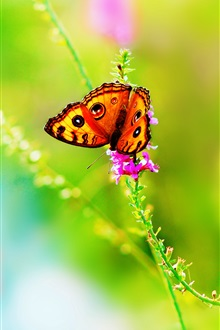 Butterfly, insect, flower, summer, green background iPhone Wallpaper Preview