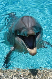 Happy dolphin, blue water iPhone Wallpaper Preview