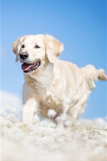 White dog, blue sky iPhone Wallpaper Preview