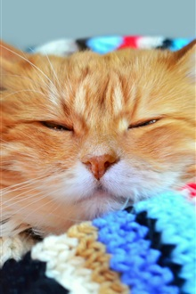 Cat sleep, scarf iPhone Wallpaper Preview
