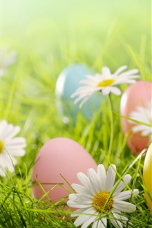Easter, colorful eggs, daisies flowers, grass iPhone Wallpaper Preview