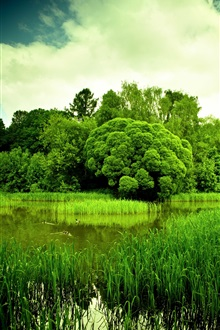 Nature scenery, green, pond, grass, trees, dusk iPhone Wallpaper Preview